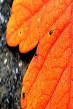 Journal Fall Foliage Orange Leaf Autumn