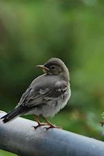 Adorable Little Wagtail Bird Journal