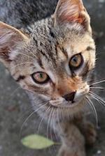 What a Face! Sweet Tabby Kitty Cat Journal