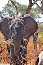 African Bull Elephant Enjoying a Snack Journal