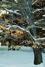Journal Snowy Winter Tree