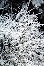 Journal Snow Covered Branches