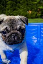Sweet Fawn Colored Pug in a Wading Pool Puppy Dog Journal