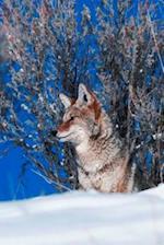 Journal Wolf Winter Watch