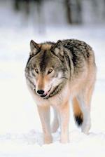 Journal Wolf Walks in Snow