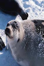 Journal Winter Seals