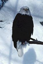 Journal Winter Eagle Snow