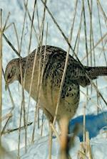 Journal Winter Bird