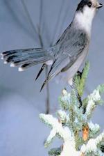 Journal Wild Bird Winter Tree