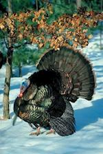 Journal Turkey Snow Scene