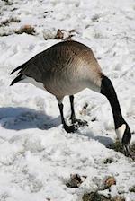 Journal Snow Goose