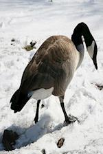 Journal Snow Goose Winter