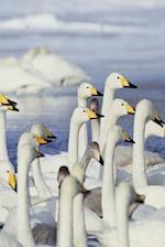Journal Gaggle Geese Winter Lake
