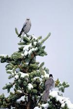 Journal Birds Snowy Tree