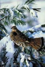 Journal Bird Snowy Evergreen Branch