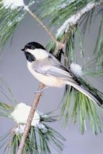 Journal Bird Snow Covered Evergreen Branch