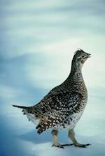 Journal Bird Outside Winter