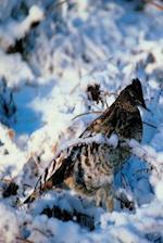 Journal Bird in Snowy Branches