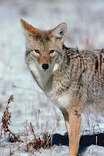 Journal Winter Predator Nature