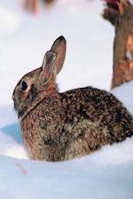 Journal Winter Rabbit Snow