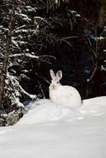Journal Wild Rabbit in Snow