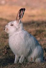 Journal White Rabbit Alert