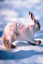 Journal White Hare Runs Through Winter Snow