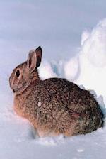 Journal Furry Rabbit in Snow