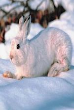Journal Cute White Bunny Lies in Snow