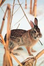 Journal Rabbit Winter