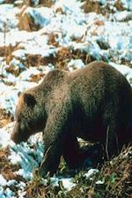 Journal Winter Grizzly Bear