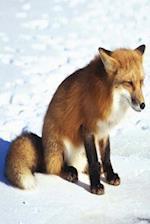 Journal Winter Red Fox Snow