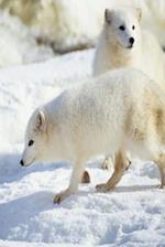 Journal White Snow Fox