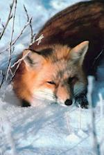 Journal Red Fox Lies in Snow