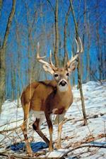 Journal Wild Deer Buck Antlers