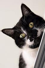 Curious Green-Eyed Black and White Cat Journal