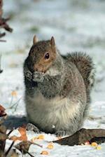 Journal Winter Grey Squirrel Gray