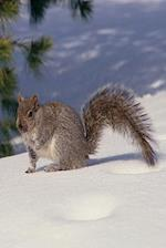 Journal Grey Squirrel Gray in Snow