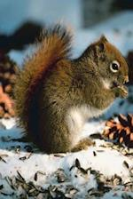 Journal Cute Red Squirrel Eats Seeds