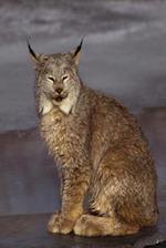 Journal Pretty Lynx Wildcat