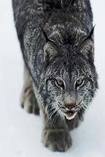 Journal Lynx Winter Attack