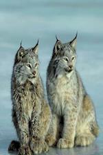 Journal Lynx Wild Cat Couple
