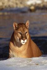 Journal Lion Winter Prowl