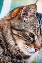 Sweet Tabby Kitty Cat Close Up Portrait Journal
