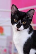 Such a Pretty Black and White Domestic Shorthair Cat Pet Journal