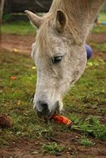 A Pretty Horse Snacking on an Orange Carrot Journal