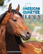 American Quarter Horses (Horse Breeds)