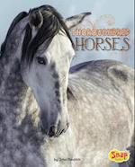 Thoroughbred Horses (Horse Breeds)