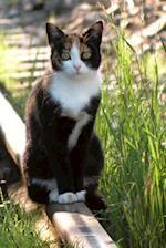A Pretty Kitty Cat Sitting on the Railroad Tracks Pet Journal