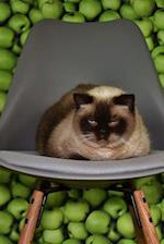 Bored Siamese Cat on a Gray Chair Pet Journal